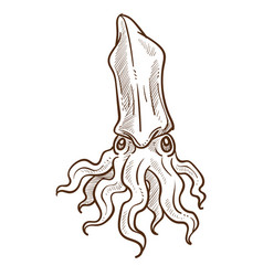 squid ocean animal with tentacles hand drawn vector image