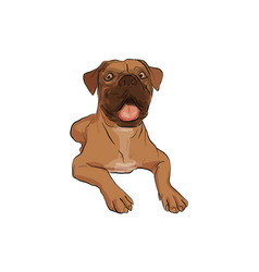 Dog-boxer vector
