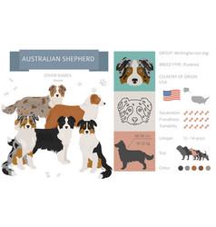 Australian shepherd dog isolated on white vector