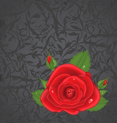 Close-up red rose isolated on grunge floral back vector image