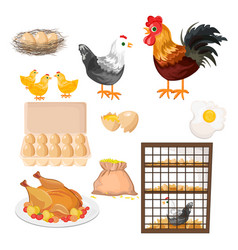 eco farming rooster chicken and eggs pattern vector image