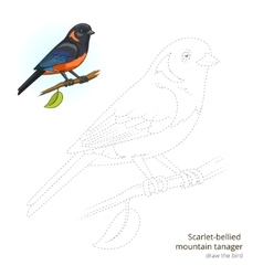 Scarlet bellied mountain tanager draw vector image