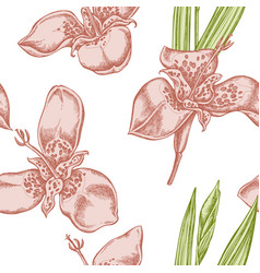 seamless pattern with hand drawn pastel tigridia vector image