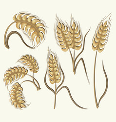 set of simple wheats ears icons vector image