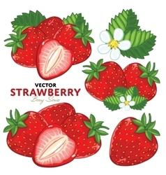 Strawberry Set vector