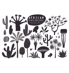 fun hand drawn african plants set cactuses vector image