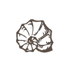 Grunge seashell sketch vector