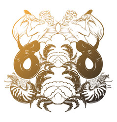 Hand drawn triton mollusk nautilus crab in vector