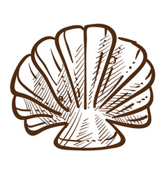 scallop sea shell detailed hand drawn sketch vector image