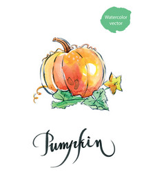watercolor orange pumpkin vector image