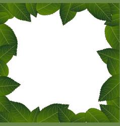 camellia leaves frame border vector image