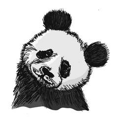 portrait of panda vector image vector image
