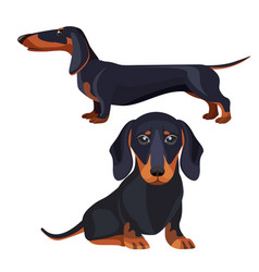 Dachshund dog with black fur in various positions vector