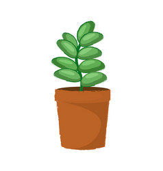 green succulent plant in a braun pot vector image