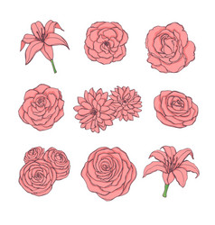 hand drawn set of pink rose lily peony flowers vector image
