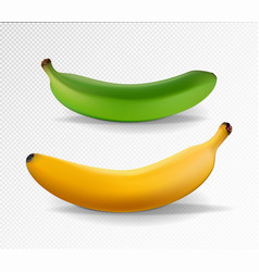 banana realistic yellow and green banana vector image