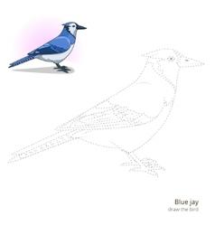 Blue jay bird learn to draw vector