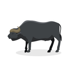 bull farm animal safari male standing vector image vector image