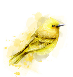 Cute yellow bird watercolor isolated on vector