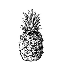 pineapple on white background with leaves vector image