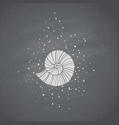 Seashells in sketch style on chalkboard vector