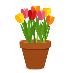 spring tulip flowers in flower pot vector image