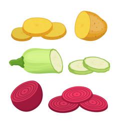 potato beet zucchini cartoon flat style vector image vector image