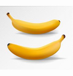 banana realistic set yellow banana vector image