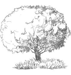 Deciduous tree with leaves and grass vector