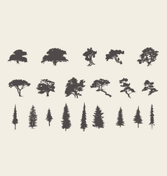 Set silhouettes trees pine fir cedar sketch vector