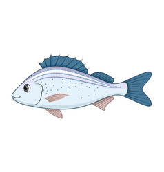 Spotted grunter fish on a white background vector