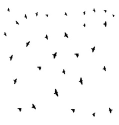 birds on a white background vector image vector image