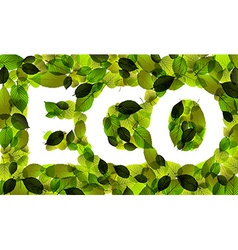 Eco word made from leafs vector image vector image