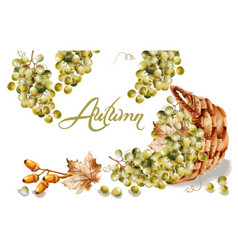 autumn card watercolor fall harvest grapes basket vector image