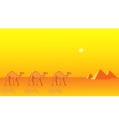 Camels and Pyramids vector