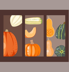 Fresh orange pumpkin cards decorative seasonal vector