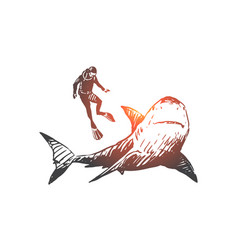 sea fauna shark swim underwater marine vector image