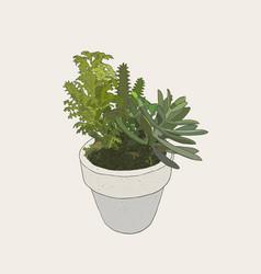 indoor plants in pots vector image vector image