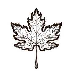autumn maple leaf coloring book for adults vector image