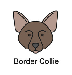 border collie color icon vector image