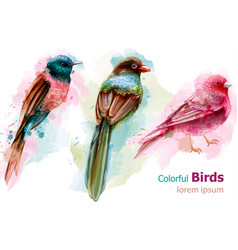 colorful tropic birds watercolor beautiful vector image