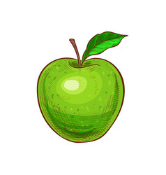 Green apple with leaf isolated veggie food sketch vector