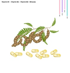 Tamarind Pods with Vitamin B1 B2 B3 and Minerals vector
