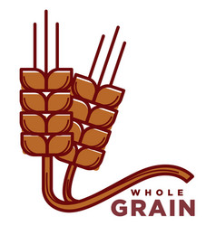 whole grain product logotype with ripe wheat ears vector image
