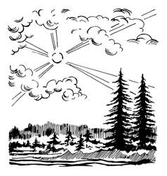 coniferous forest landscape vector image