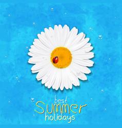 Daisy summer flower chamomile best summer vector