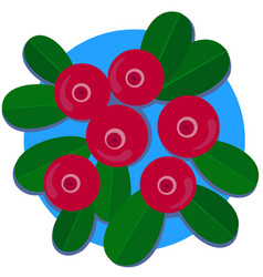 lingonberry vector image