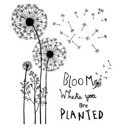 Hand drawn dandelion flowers with hand lettering vector