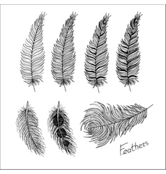Hand drawn bird feathers Boho style vector image