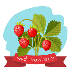 wild strawberry with green leaves isolated on vector image vector image